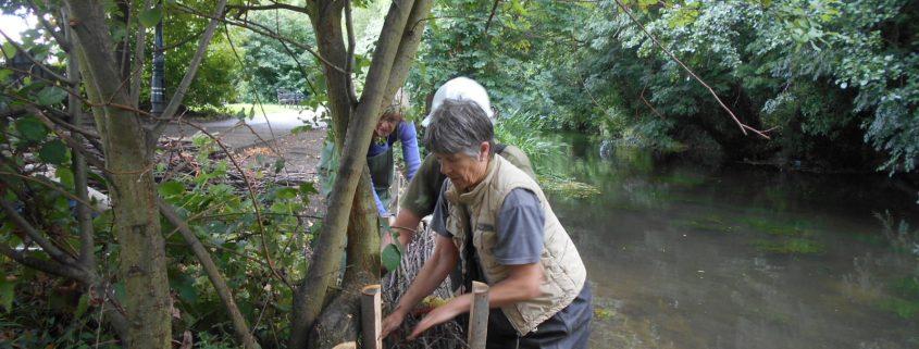 volunteers putting faggot bundles between stakes in River Stour