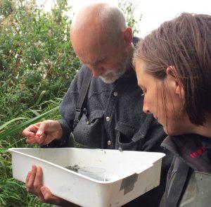kscp staff examining invertebrate samples