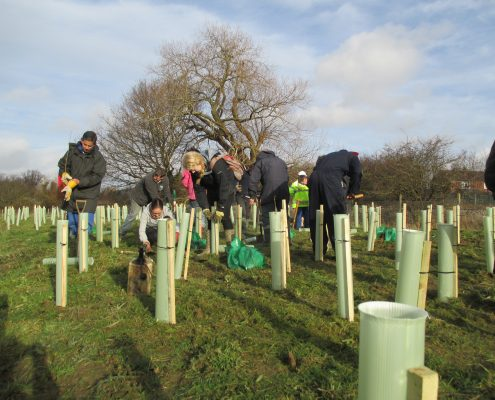 volunteers planting tree saplings , fixing tree guards