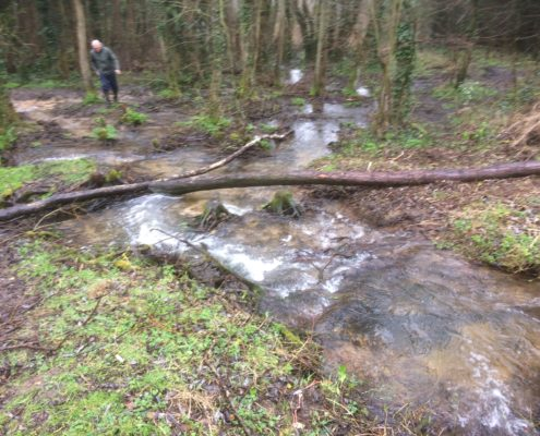 View of stream running through the woods